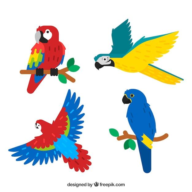 Collection of four tropical birds Free Vector