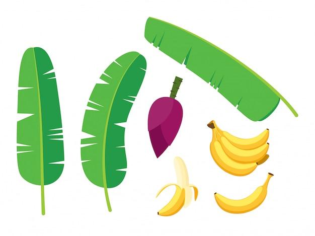 Collection of fresh banana palm tree vector set Premium Vector