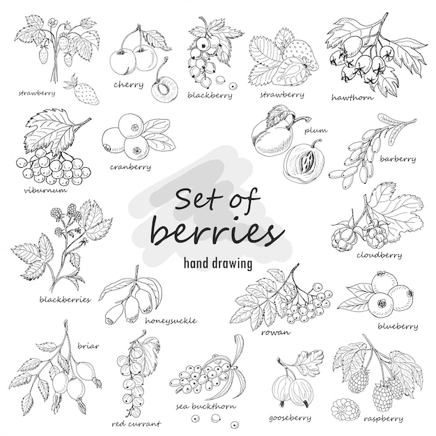 Collection of garden and wild berries in sketch style Premium Vector