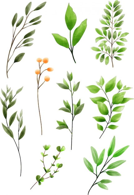 Collection of greenery style watercolor Premium Vector