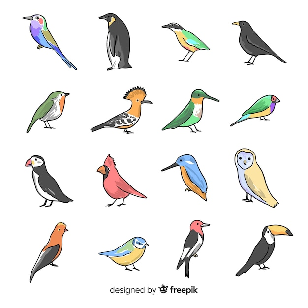 Collection of hand drawn birds Free Vector