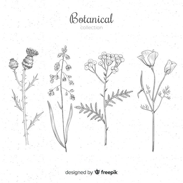 77  Vintage Art Print//Poster Botanical Herb Medicinal Plants Maize