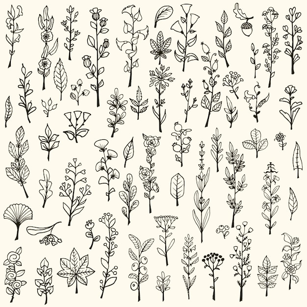 Collection of hand drawn flowers Free Vector