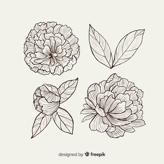 Collection of hand drawn peony flowers Free Vector