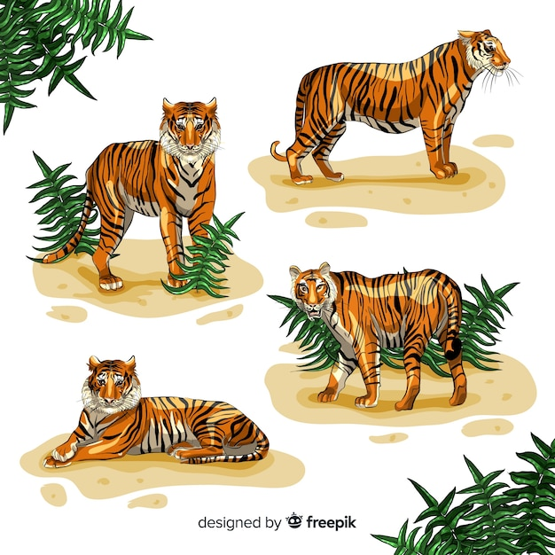 Collection of hand drawn tigers Free Vector
