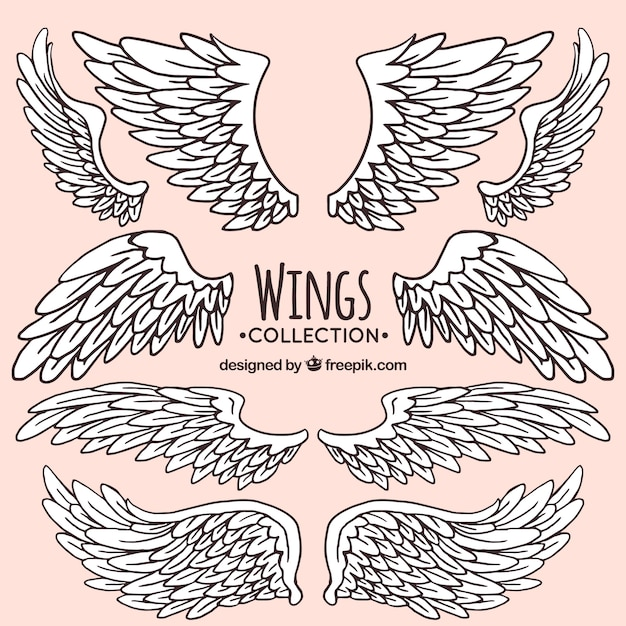Collection of hand-drawn wing Free Vector