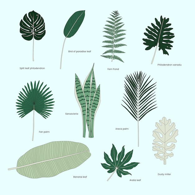 Collection of illustrated tropical leaves Free Vector
