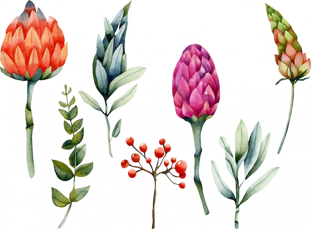 Collection of isolated watercolor protea and plants Premium Vector