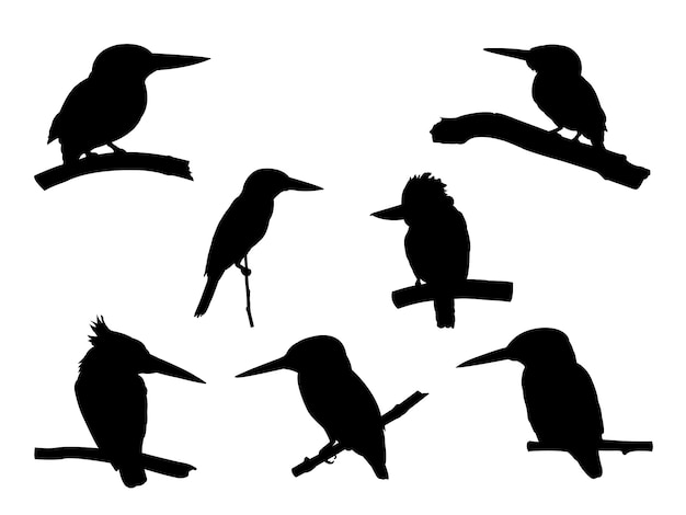 Collection of kingfisher bird on tree branch silhouettes. Premium Vector