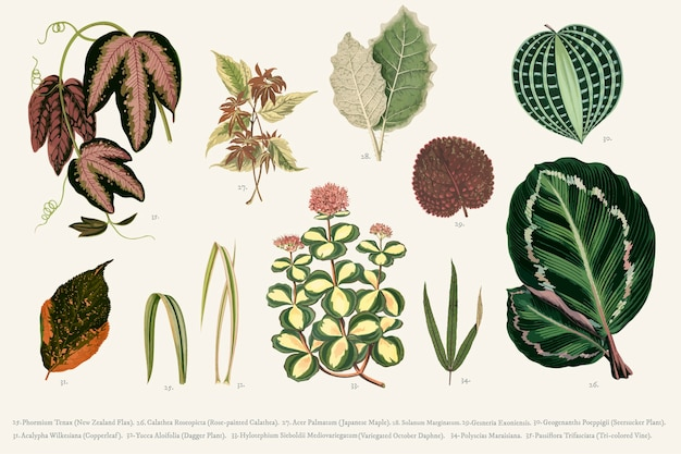Collection of leaves Free Vector