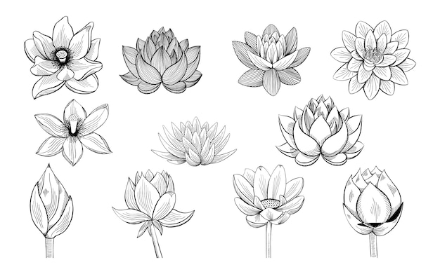 Collection of lotus sketches. Premium Vector