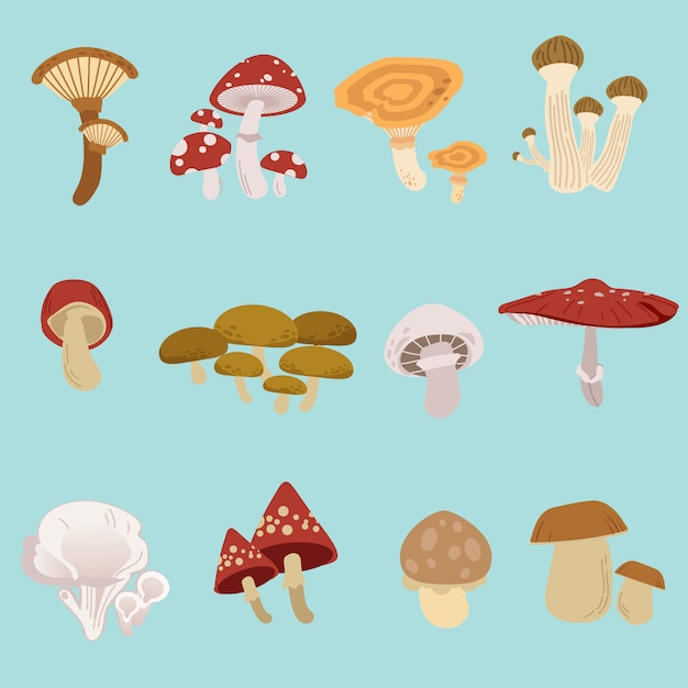 The collection of mushroom pack set Premium Vector