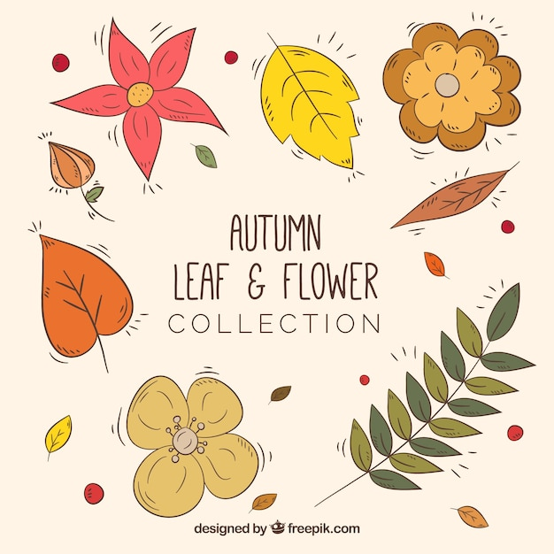 Collection of autumnal hand drawn flowers