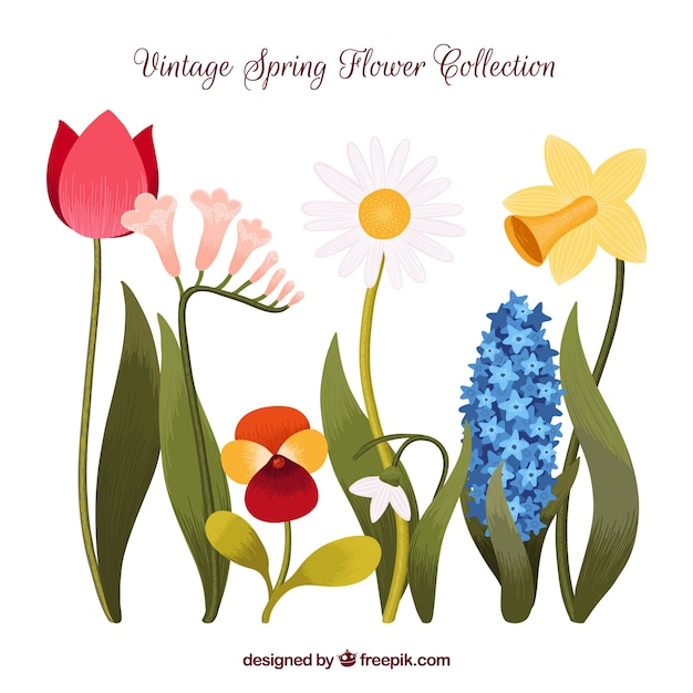 Collection of beautiful flowers in vintage\ style