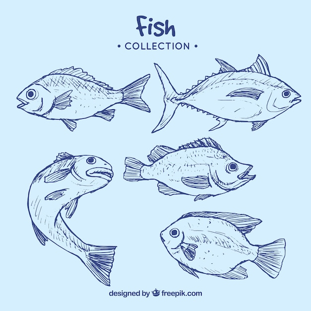 Collection of blue fish Free Vector