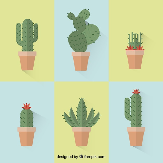 Collection of cactus Free Vector