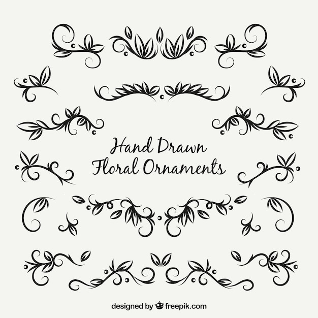 Collection of decorative elements of hand drawn leaves