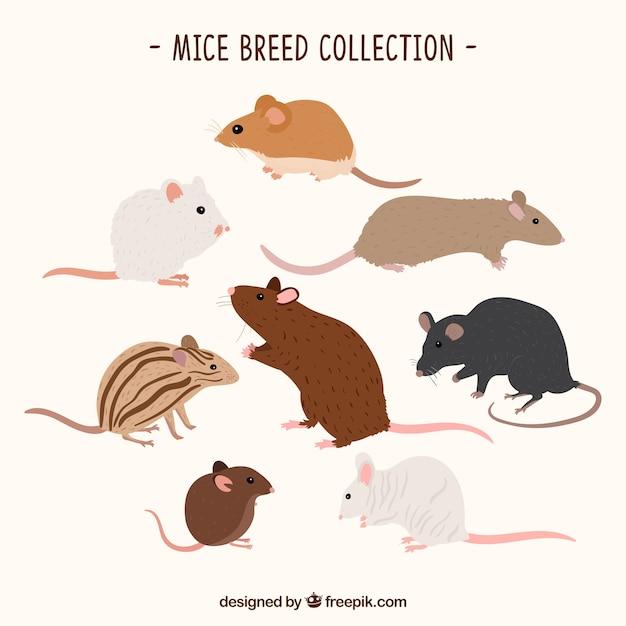 Коллекция различных пород мышей Бесплатные векторы