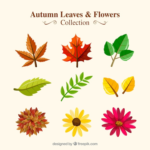 Collection of dry leaves with autumnal flowers