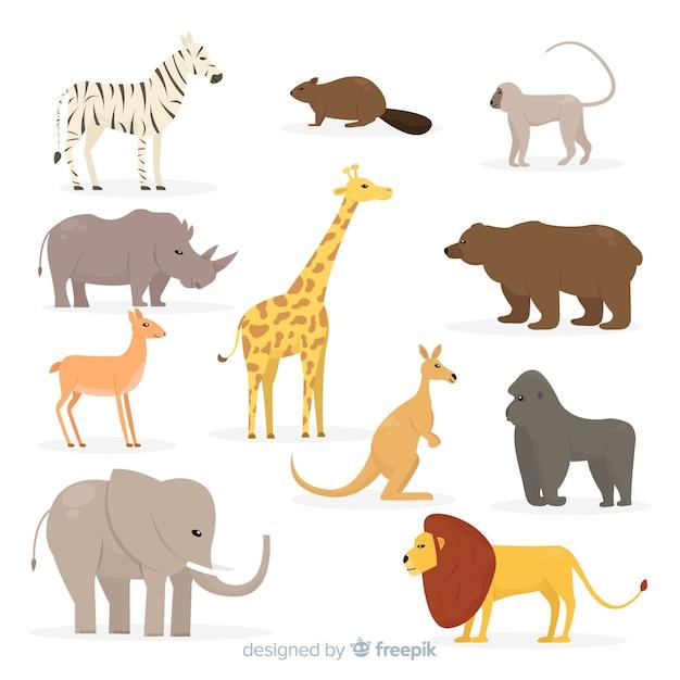 Коллекция плоских тропических животных Бесплатные векторы