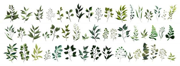 Сбор зелени листьев растений лесных трав тропических листьев весенней флоры в стиле акварели. Бесплатные векторы