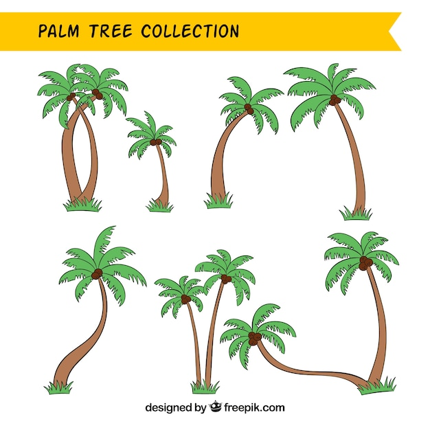 Collection of hand-drawn palm trees Free Vector