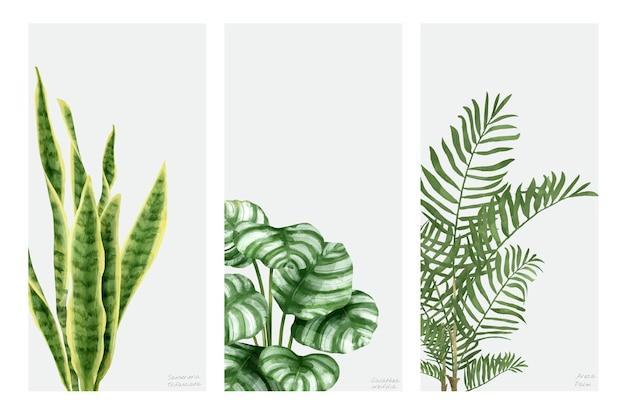 白い背景に描かれた手描きの植物のコレクション 無料ベクター