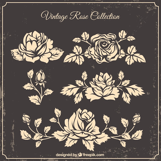 Collection of hand-drawn roses in vintage\ style
