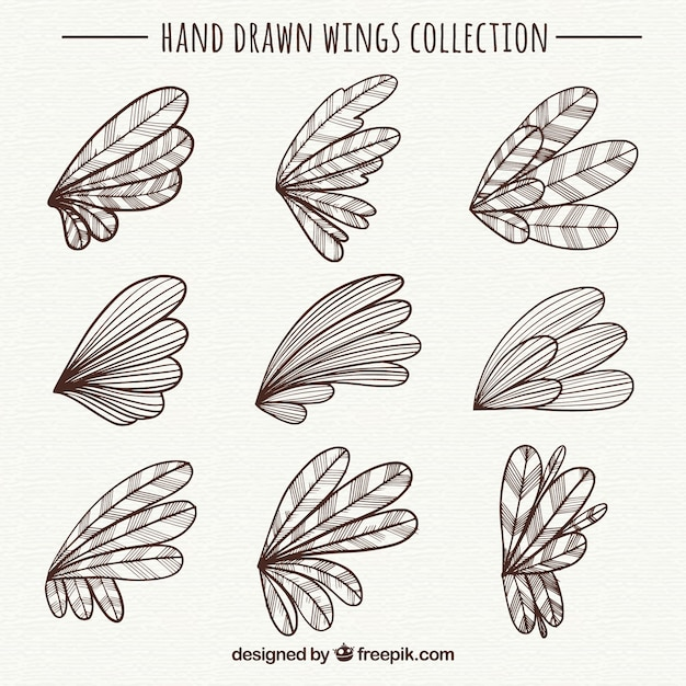 Download Vector - Collection of hand-drawn wings - Vectorpicker