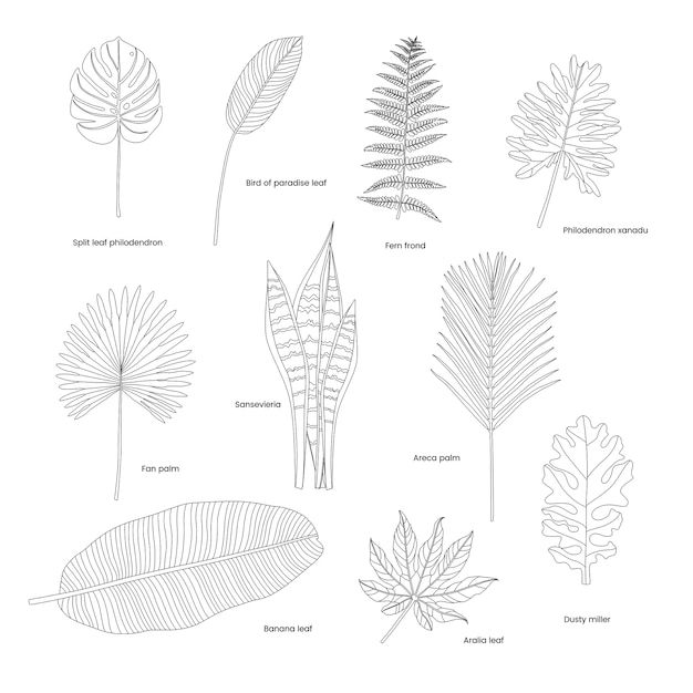 Коллекция иллюстрированных тропических листьев Бесплатные векторы