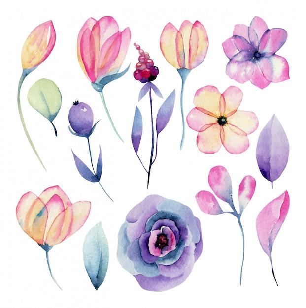 孤立した水彩画のピンクと紫の花のコレクション、手描きのイラスト Premiumベクター