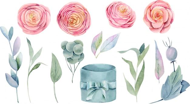 Коллекция изолированных акварель розовых красивых роз, зеленых листьев, веток и подарочной коробке Premium векторы