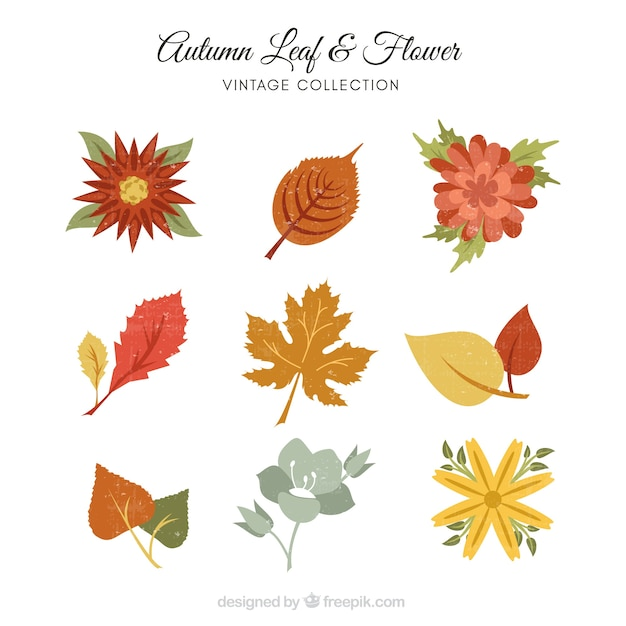 Collection of leaves and flowers in retro style