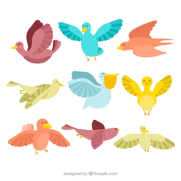 Collection of nine colorful birds