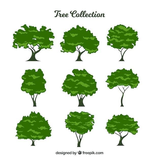 9 잎이 많은 나무의 수집 무료 벡터