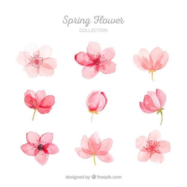 Collection of pink spring flowers Free Vector