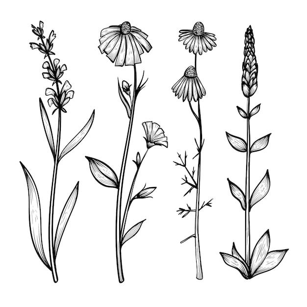 Коллекция реалистичных рисованной травы и дикие цветы Бесплатные векторы