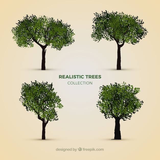 Collection of realistic trees  Free Vector