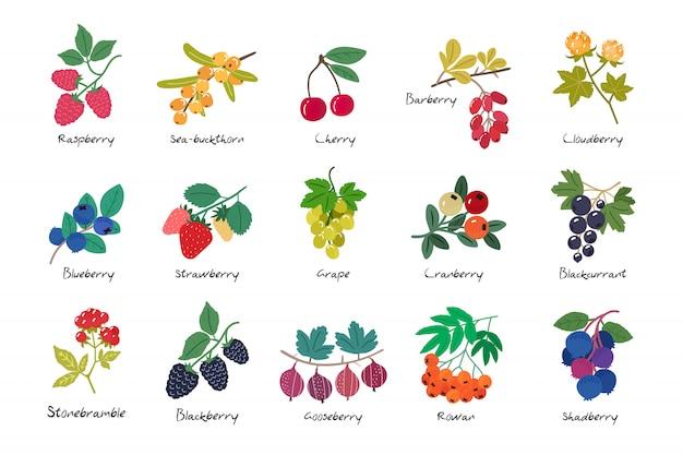 分離された熟した果実のコレクション Premiumベクター