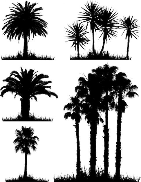 silhouette date palm tree - photo #16