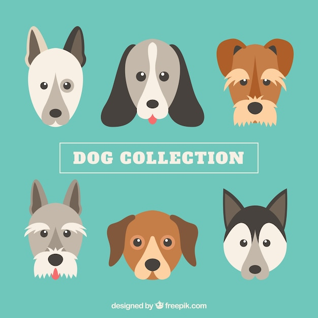 Collection of six cute dogs in flat design
