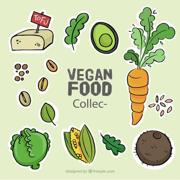 Collection of sketches delicious vegan food