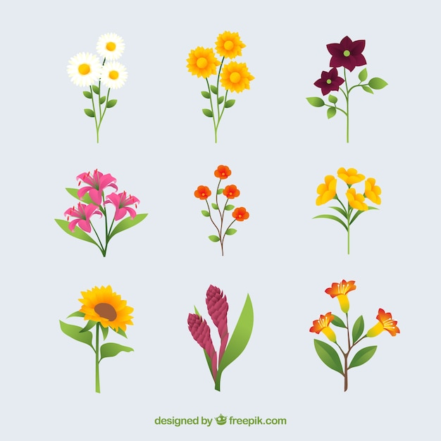 Collection of summer flowers in flat\ design