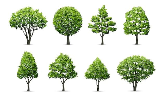 나무 흰색 배경에 고립의 컬렉션입니다. 프리미엄 벡터