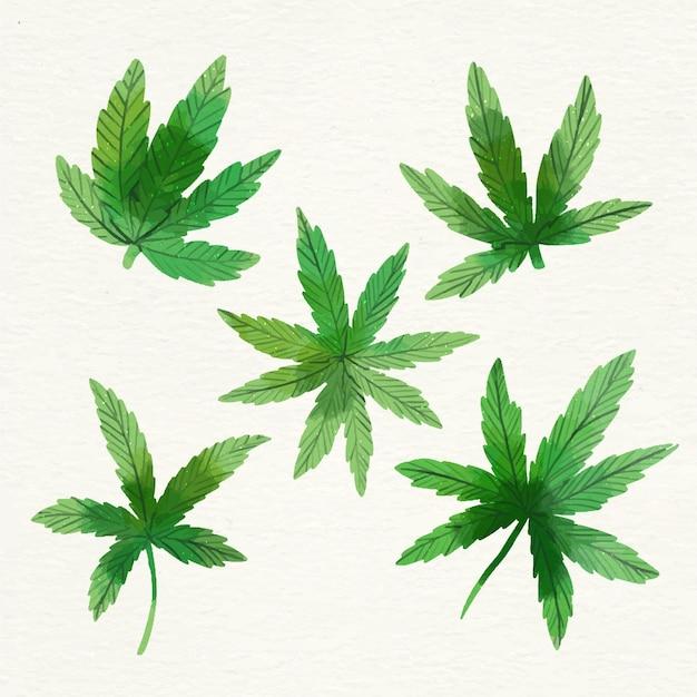 수채화 대마초 잎의 컬렉션 프리미엄 벡터
