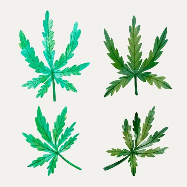 수채화 대마초 잎의 컬렉션 무료 벡터