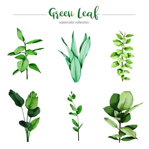 水彩イラスト緑の葉のコレクション 無料ベクター