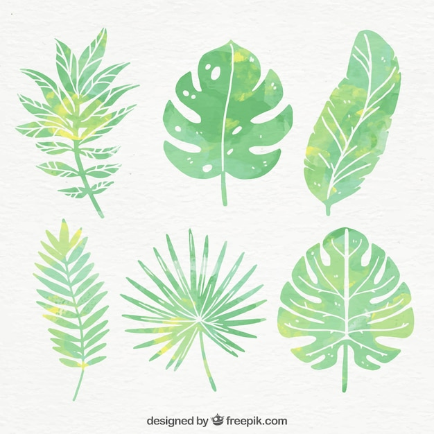 Collection of watercolor palm leaves Free Vector