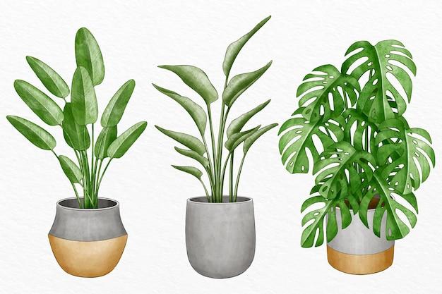 鉢植えの水彩植物のコレクション 無料ベクター