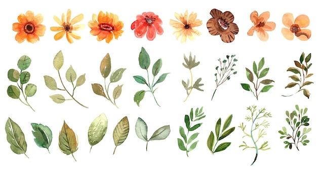 水彩黄色の花と葉のコレクション Premiumベクター